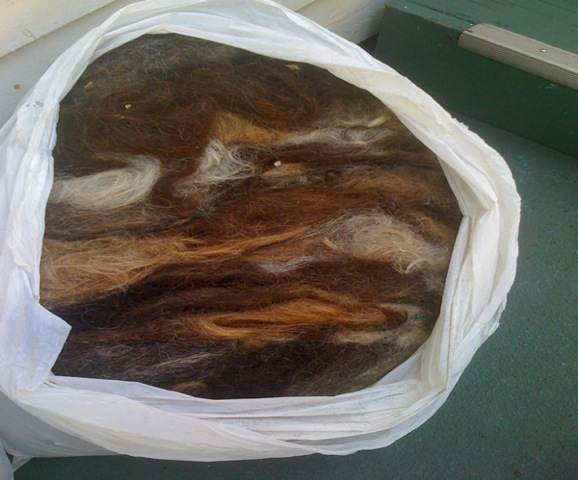 Bag full of hair ready to be turned in to booms!