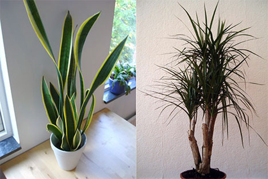 Best air filtering houseplants according to nasa matter for Best air filtering houseplants