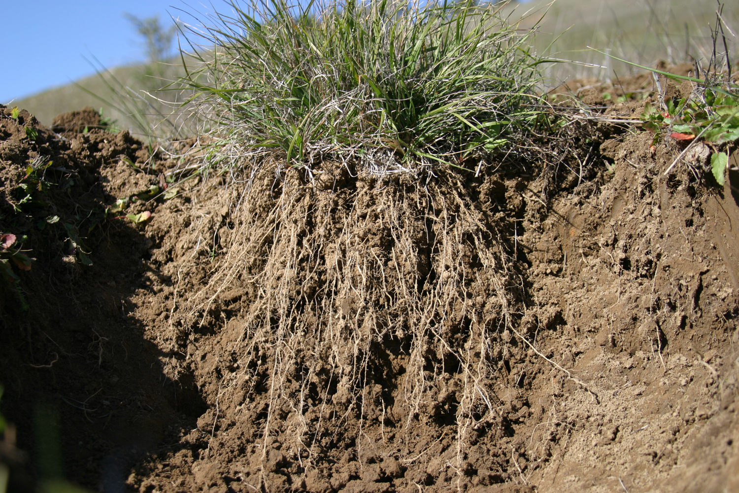 There is too much carbon in the air and too little in the soil!