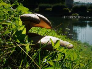 Fungus052715
