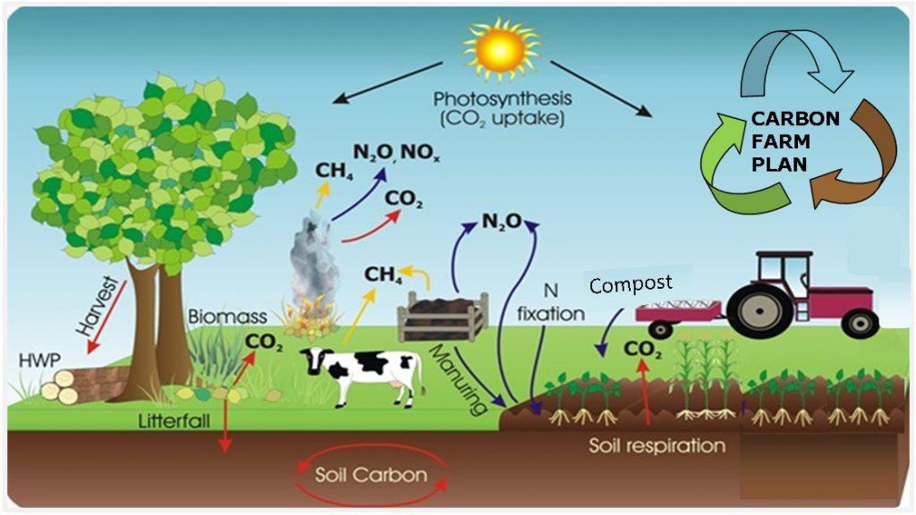 carbonpic
