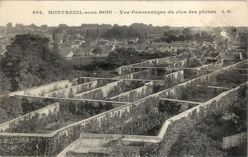 Fruit Walls Urban Farming In The 1600s Matter Of Trust